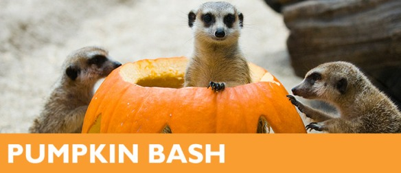 pumpkin-bash-header