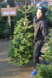 Troop 100 Tree Lot 1
